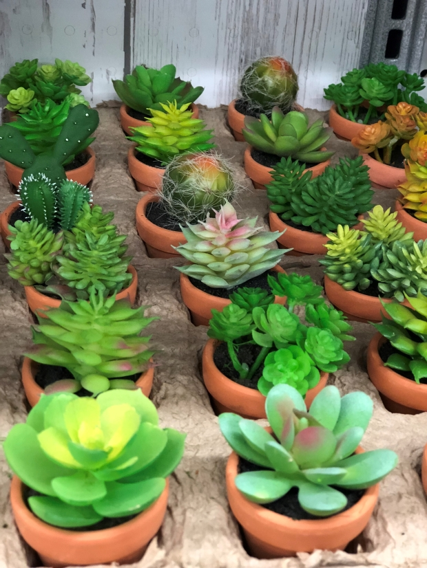 Succulent Mini Plants Home Decor
